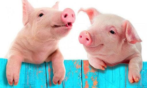 Nhìn thấy lợn trong giấc mơ thể hiện điềm báo gì?